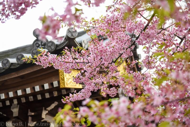 tokyo-shrines-34