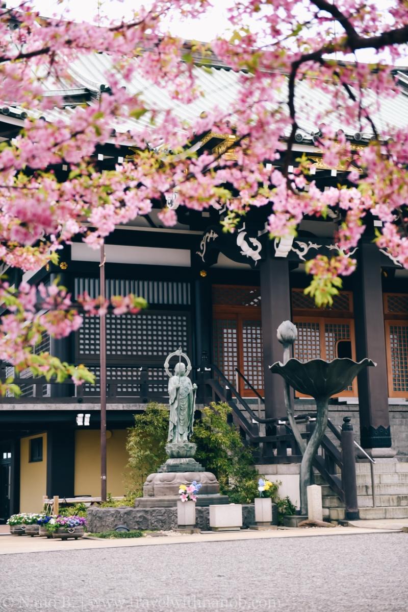 tokyo-shrines-50
