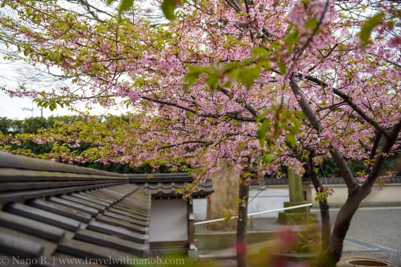 tokyo-shrines-51