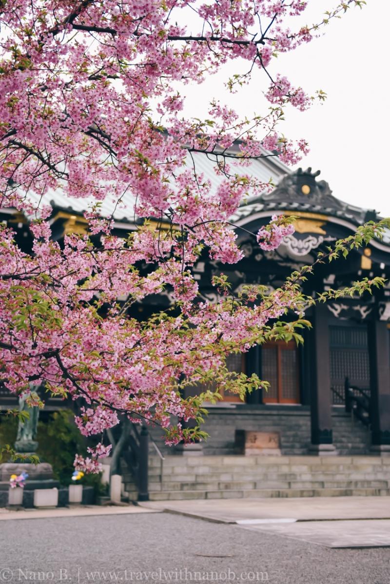 tokyo-shrines-56
