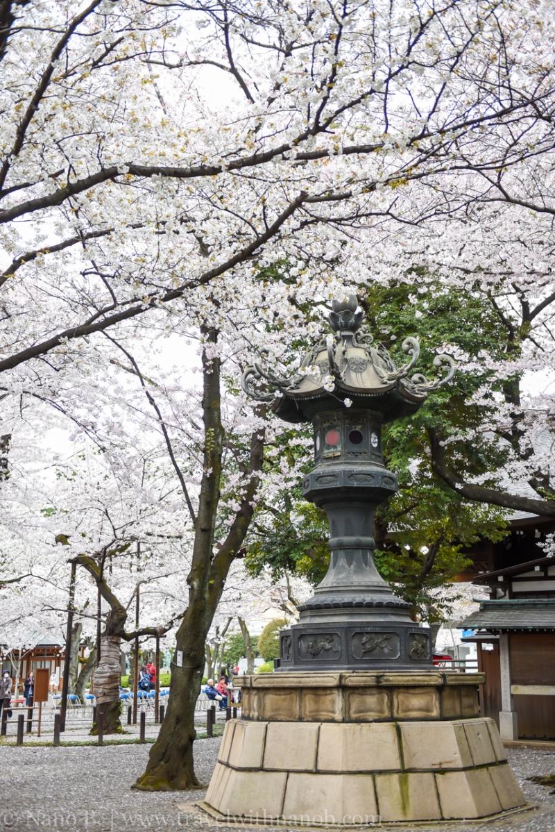 chidorigafuchi-32