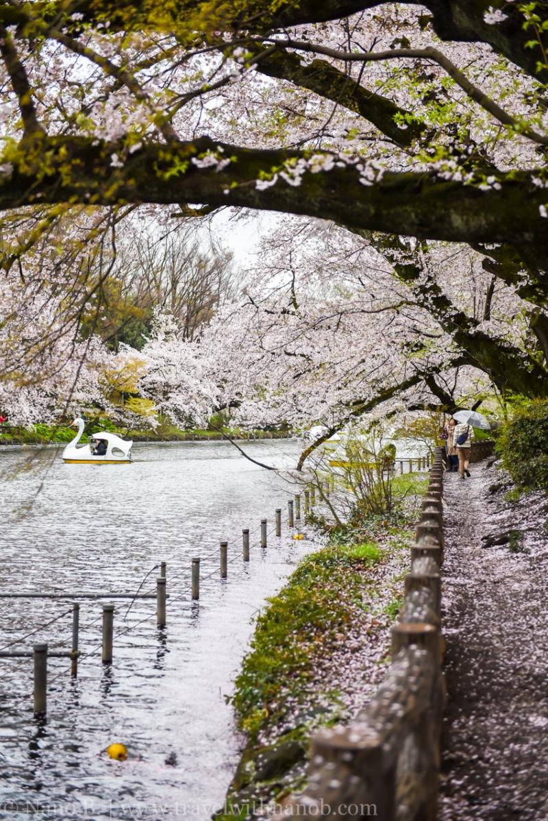 inokashira-park-12