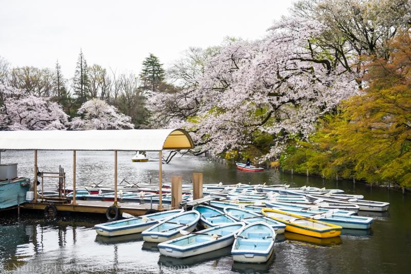 inokashira-park-14