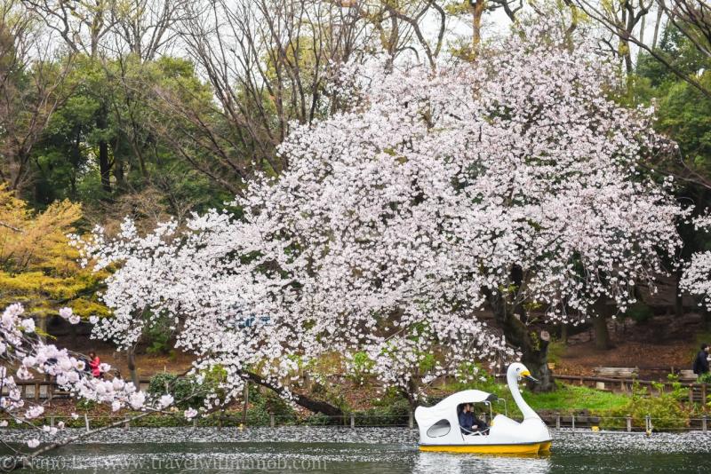 inokashira-park-7