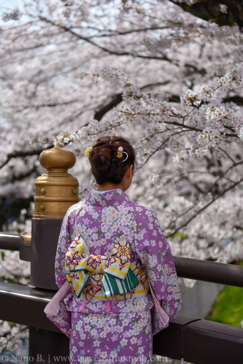 Kawagoe-Cherry-Blossom-19
