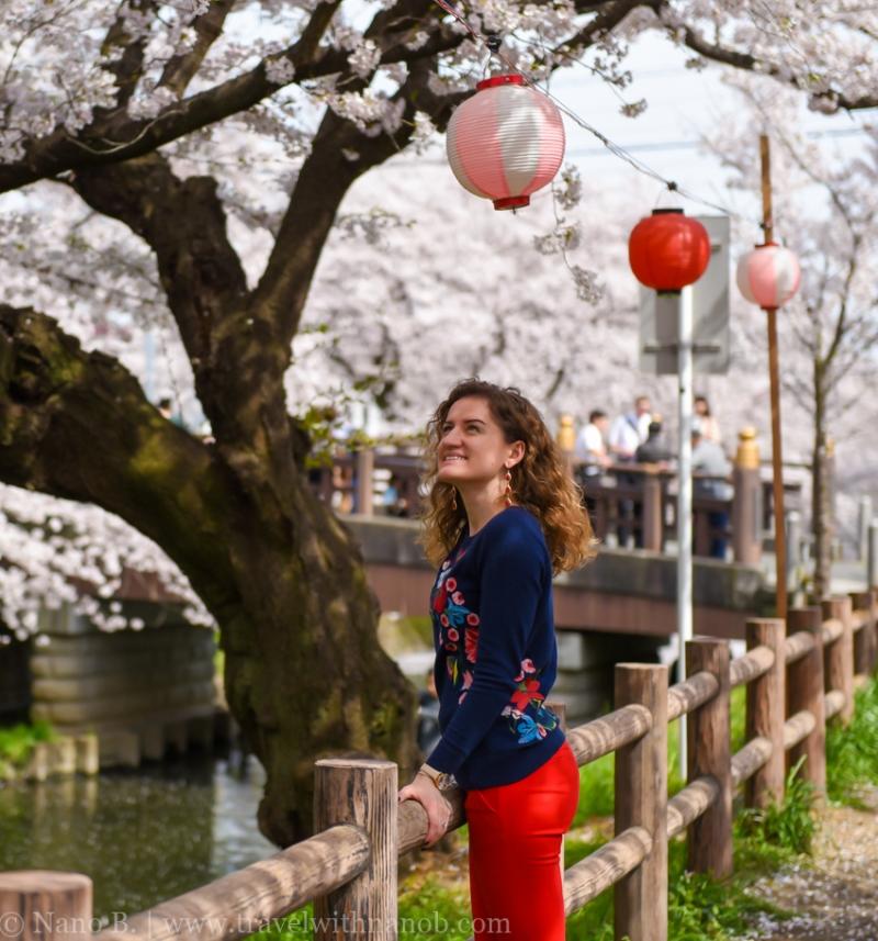 Kawagoe-Cherry-Blossom-31