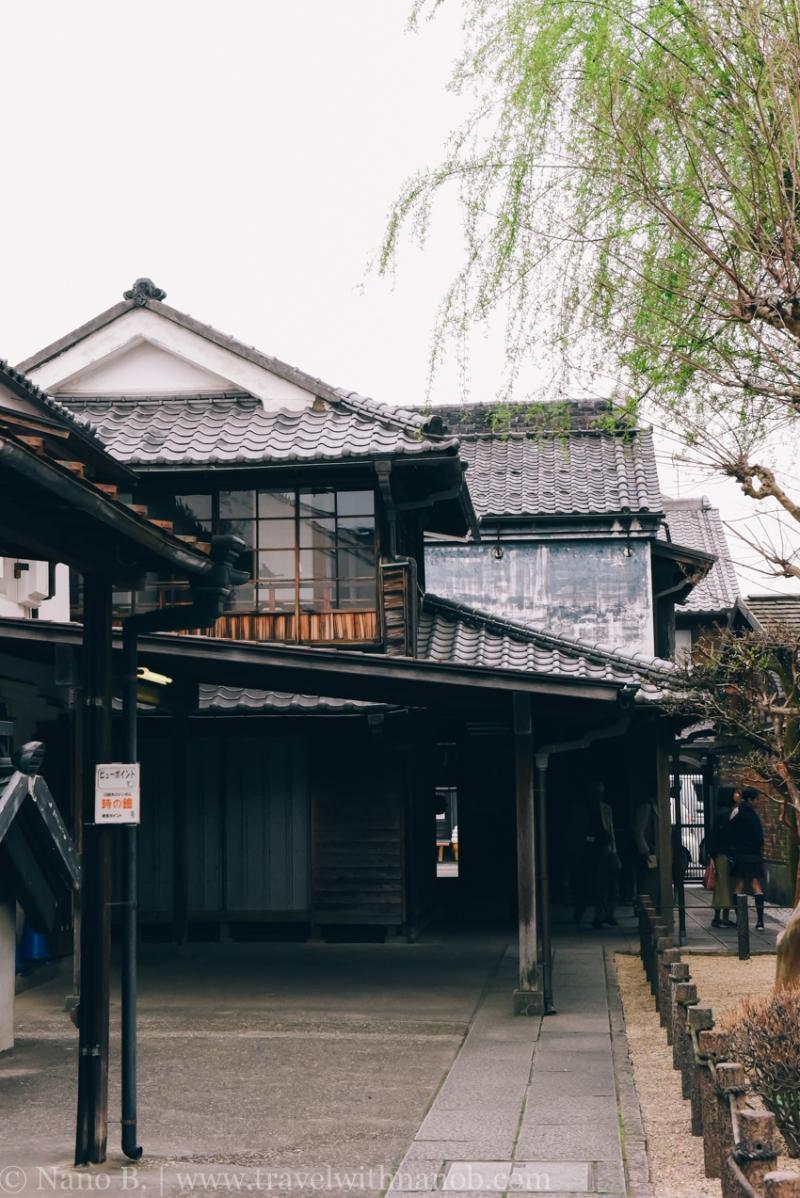 Kawagoe-Cherry-Blossom-61