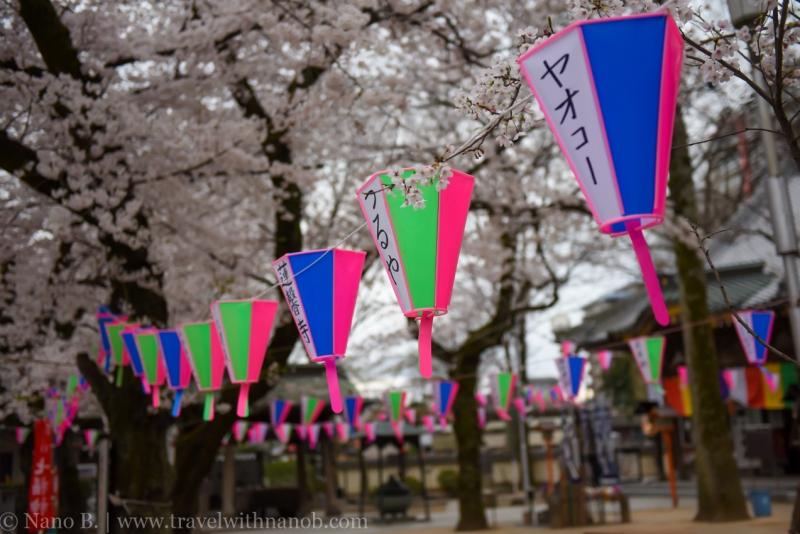 Kawagoe-Cherry-Blossom-73