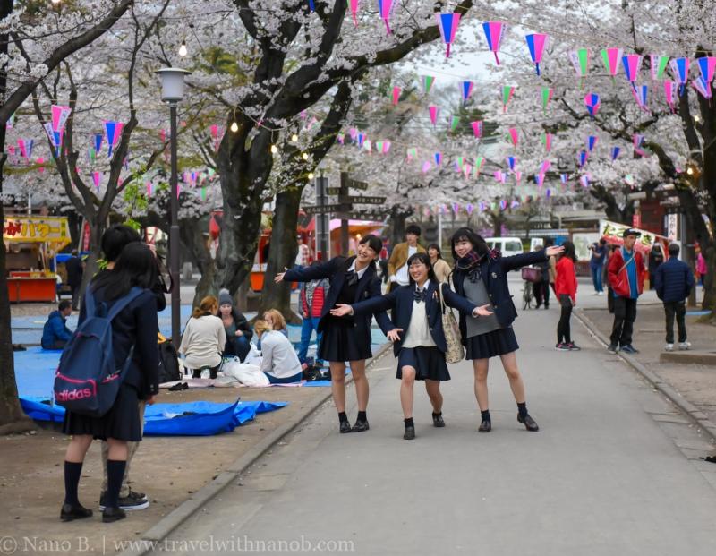 Kawagoe-Cherry-Blossom-91