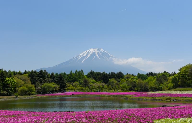Fuji-Shibazakura-Festival-16