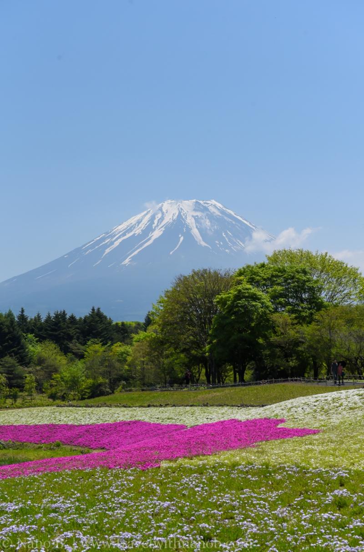 Fuji-Shibazakura-Festival-19