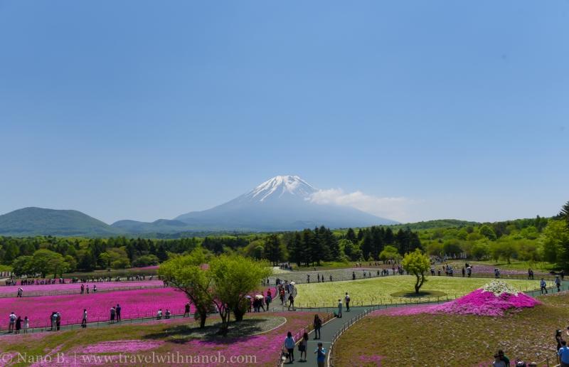 Fuji-Shibazakura-Festival-7