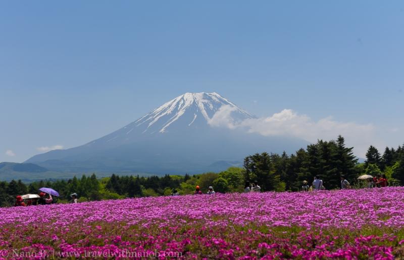Fuji-Shibazakura-Festival-9