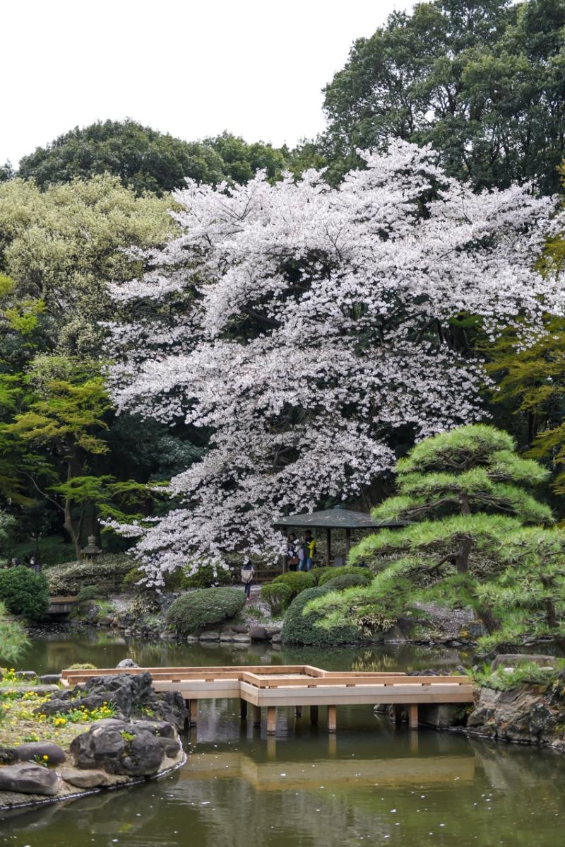 shinjuku-gyoen-garden-tokyo-12