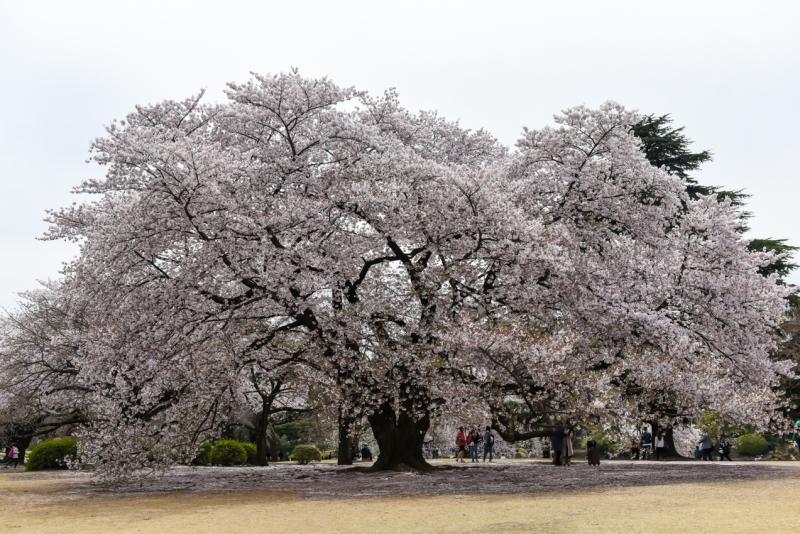 shinjuku-gyoen-garden-tokyo-14