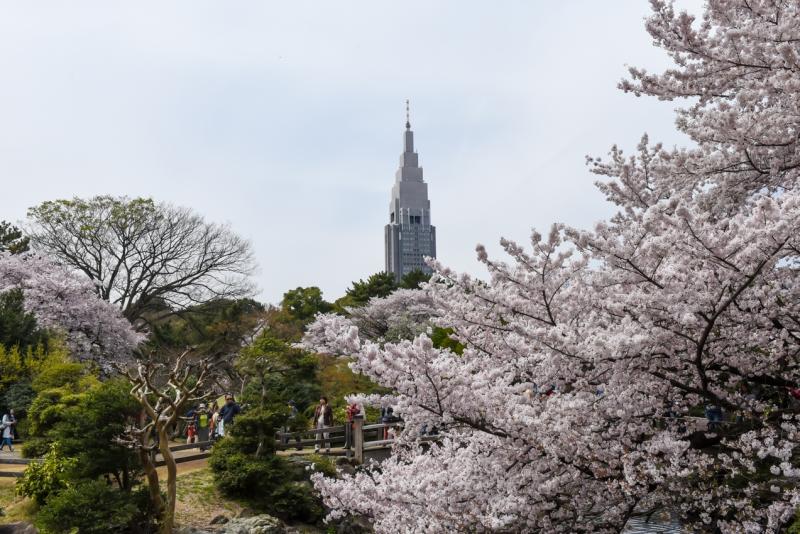 shinjuku-gyoen-garden-tokyo-18