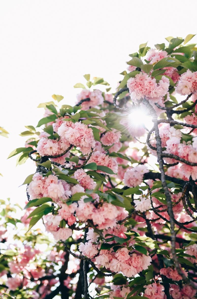 shinjuku-gyoen-garden-tokyo-38