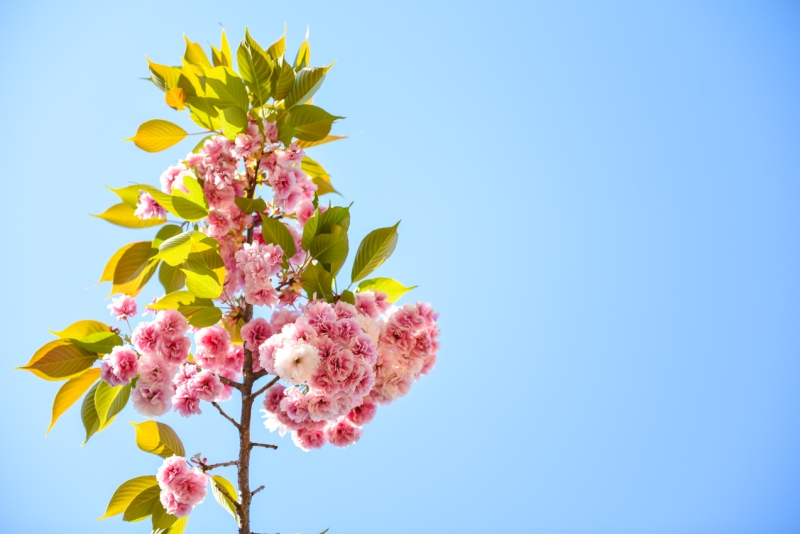 shinjuku-gyoen-garden-tokyo-54