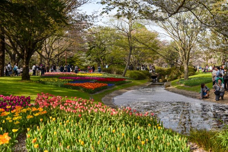 Showa-Kinen-Park-Tokyo-21