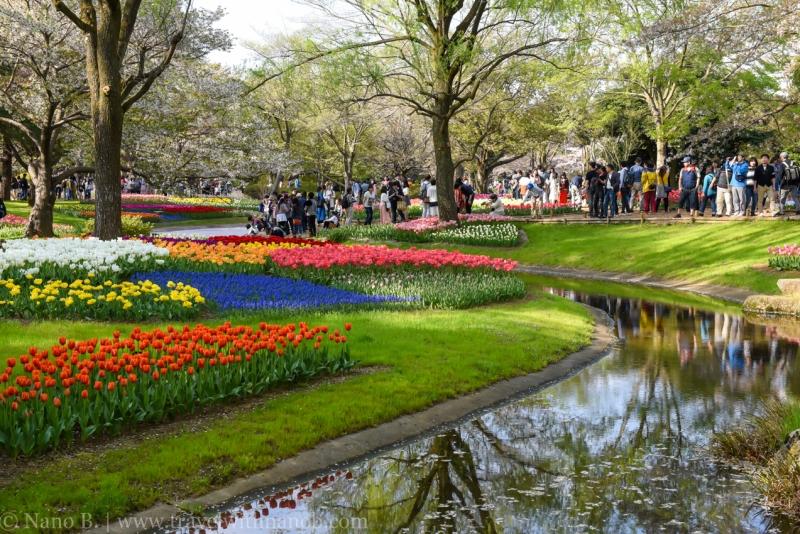 Showa-Kinen-Park-Tokyo-27