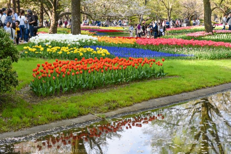 Showa-Kinen-Park-Tokyo-29