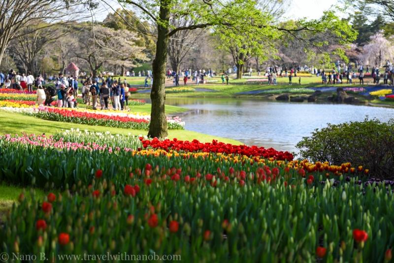 Showa-Kinen-Park-Tokyo-30