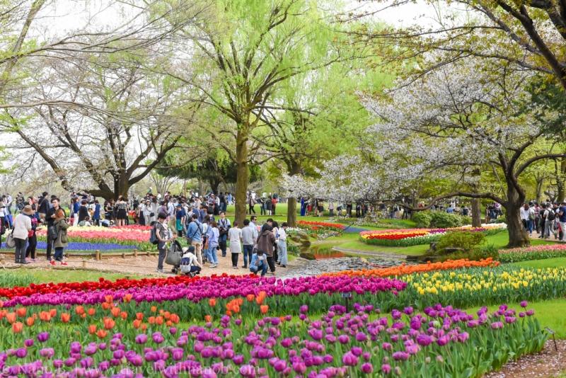 Showa-Kinen-Park-Tokyo-5