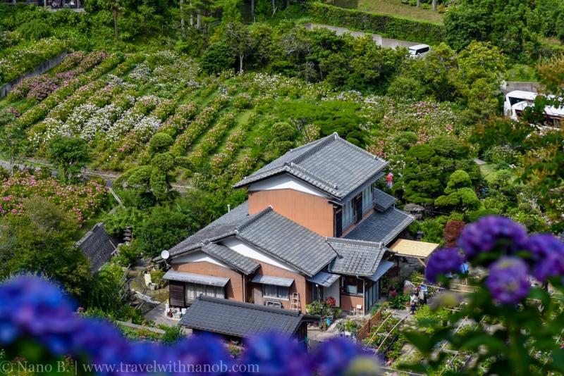 chiba-hydrangea-garden-21