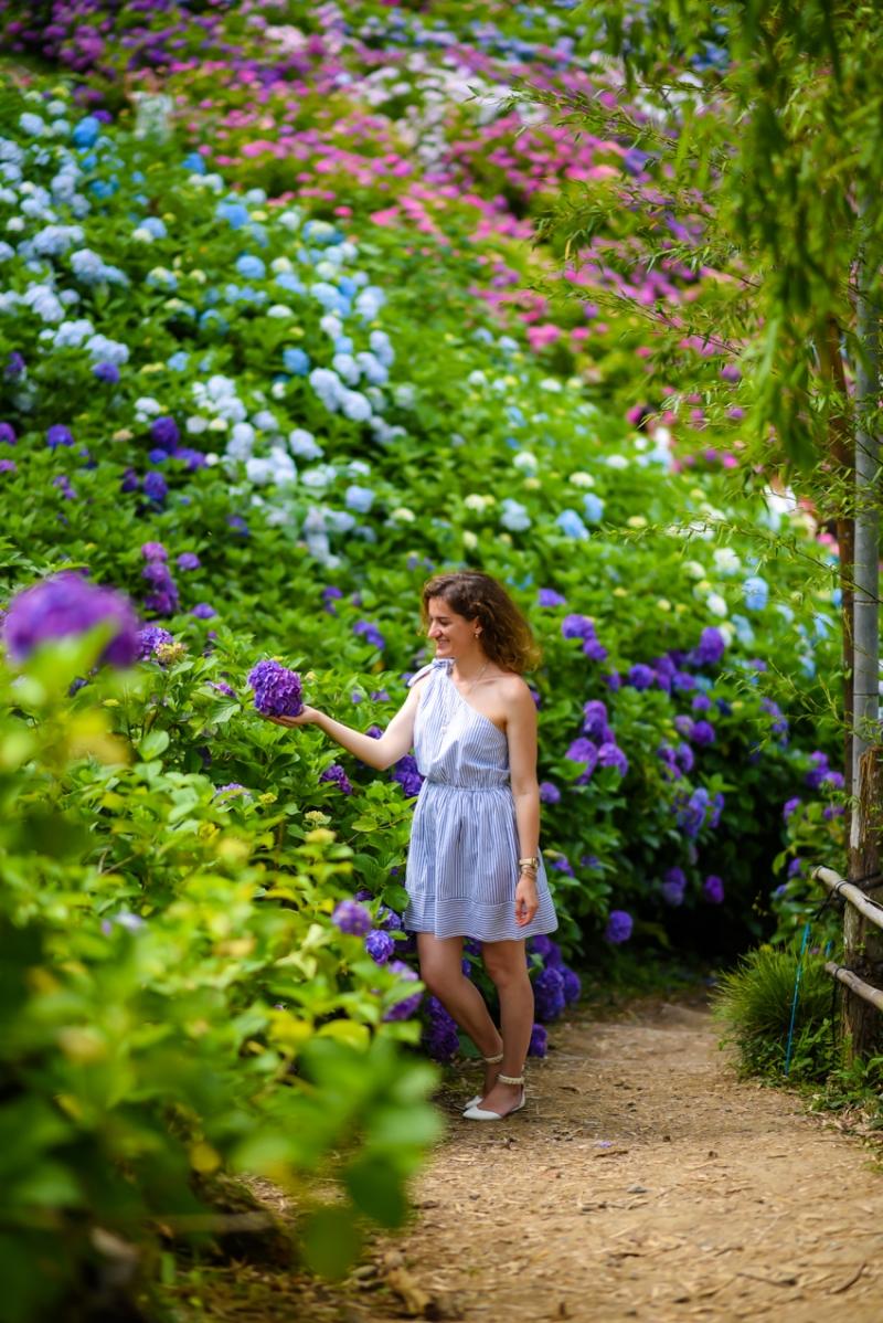 chiba-hydrangea-garden-2