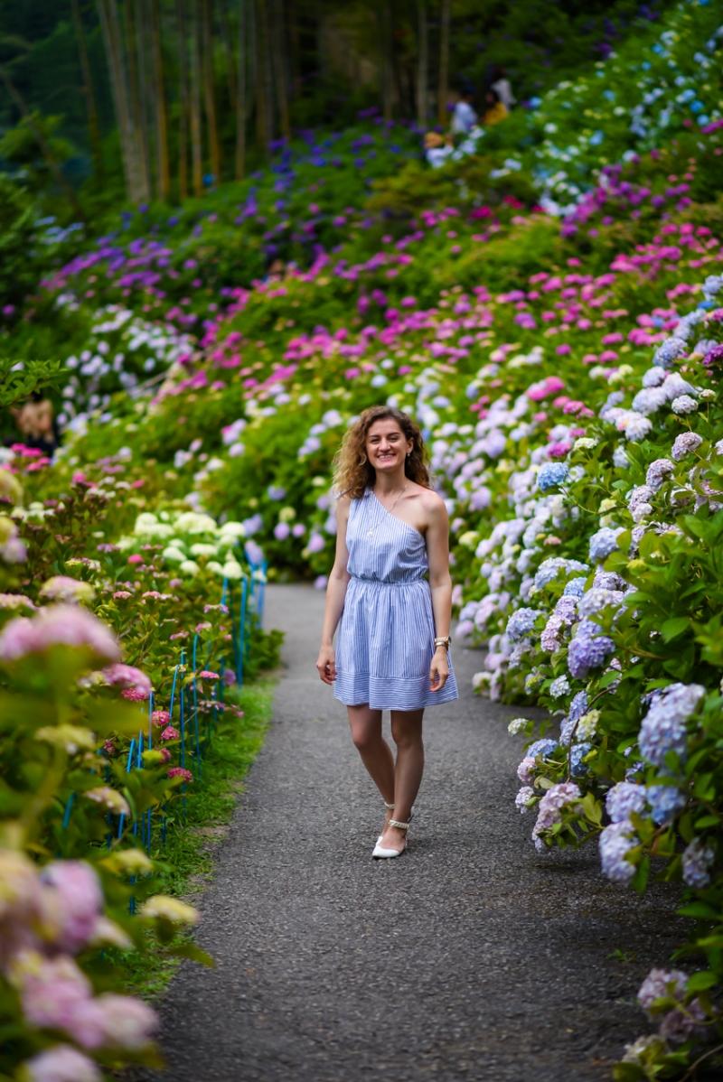 chiba-hydrangea-garden-23