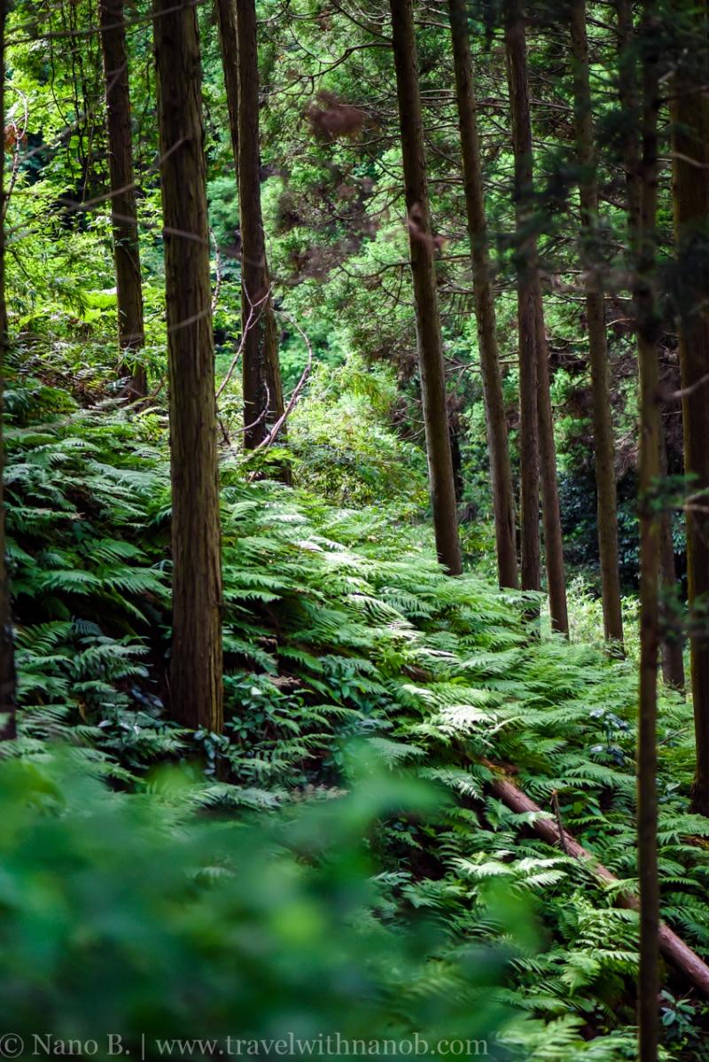 chiba-hydrangea-garden-26