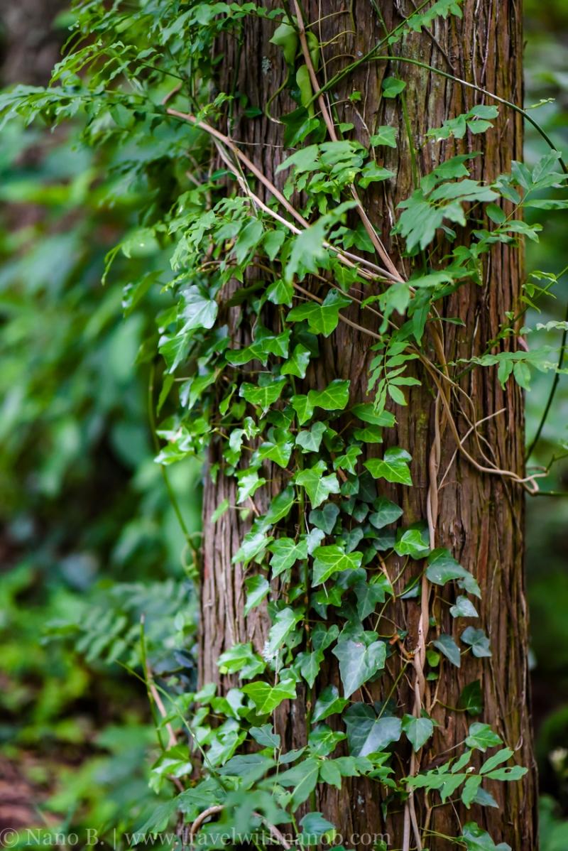 chiba-hydrangea-garden-27