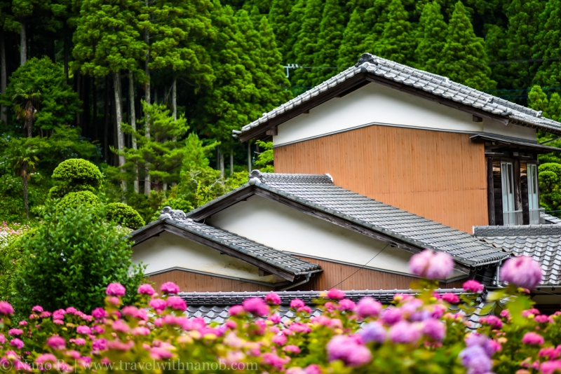 chiba-hydrangea-garden-50