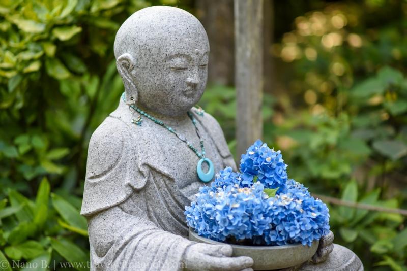 chiba-hydrangea-garden-9