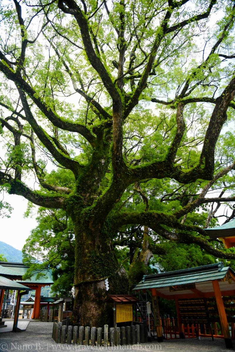 nachi-falls-wakayama-14