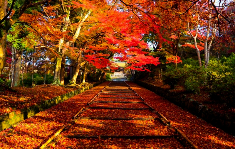kyoto-autumn-leaves-14