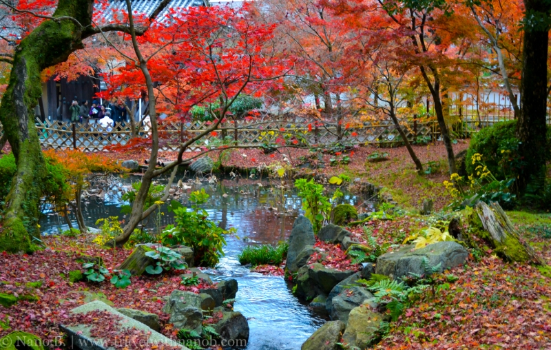 kyoto-autumn-leaves-17