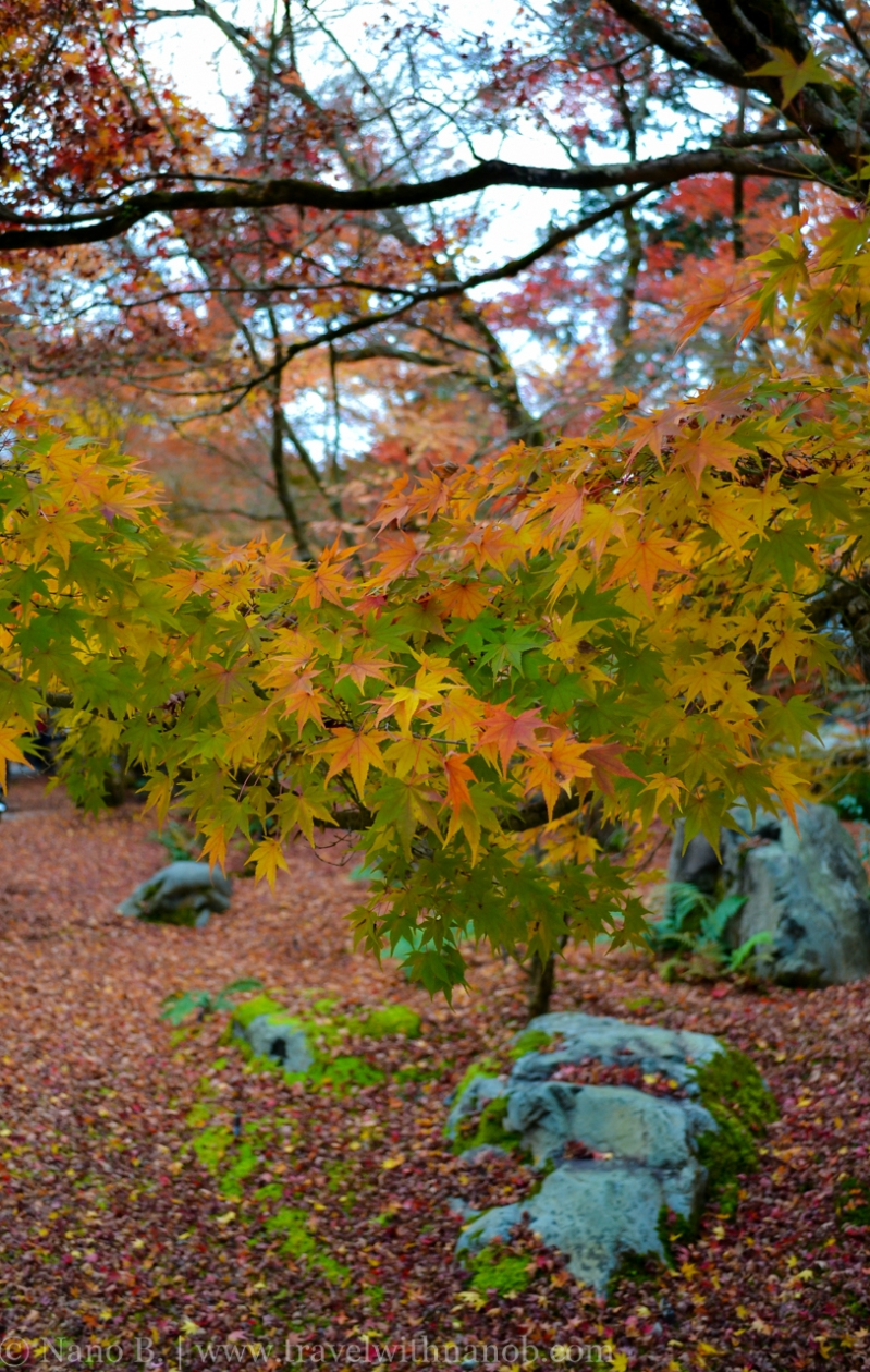kyoto-autumn-leaves-22