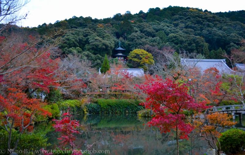 kyoto-autumn-leaves-23