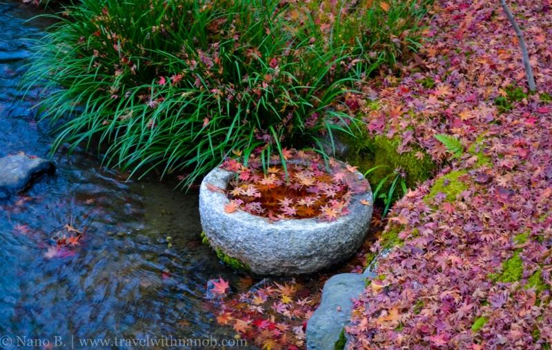 kyoto-autumn-leaves-24
