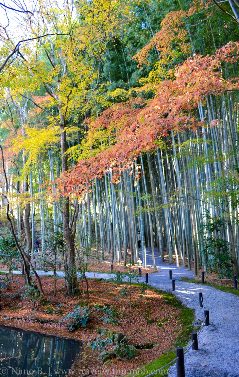 kyoto-autumn-leaves-29