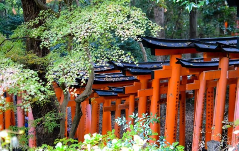kyoto-autumn-leaves-36