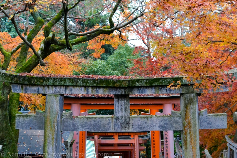 kyoto-autumn-leaves-39