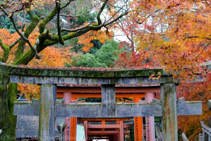 kyoto-autumn-leaves-39