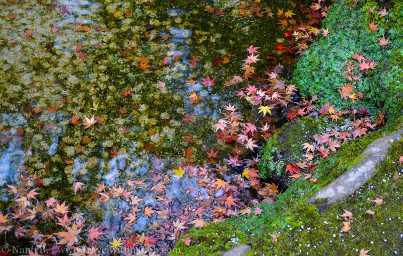 kyoto-autumn-leaves-44