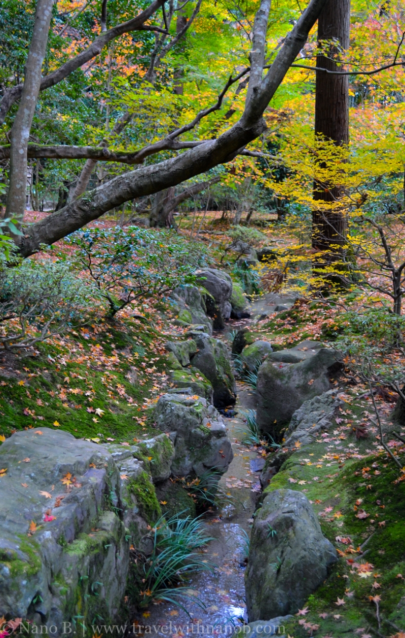 kyoto-autumn-leaves-49