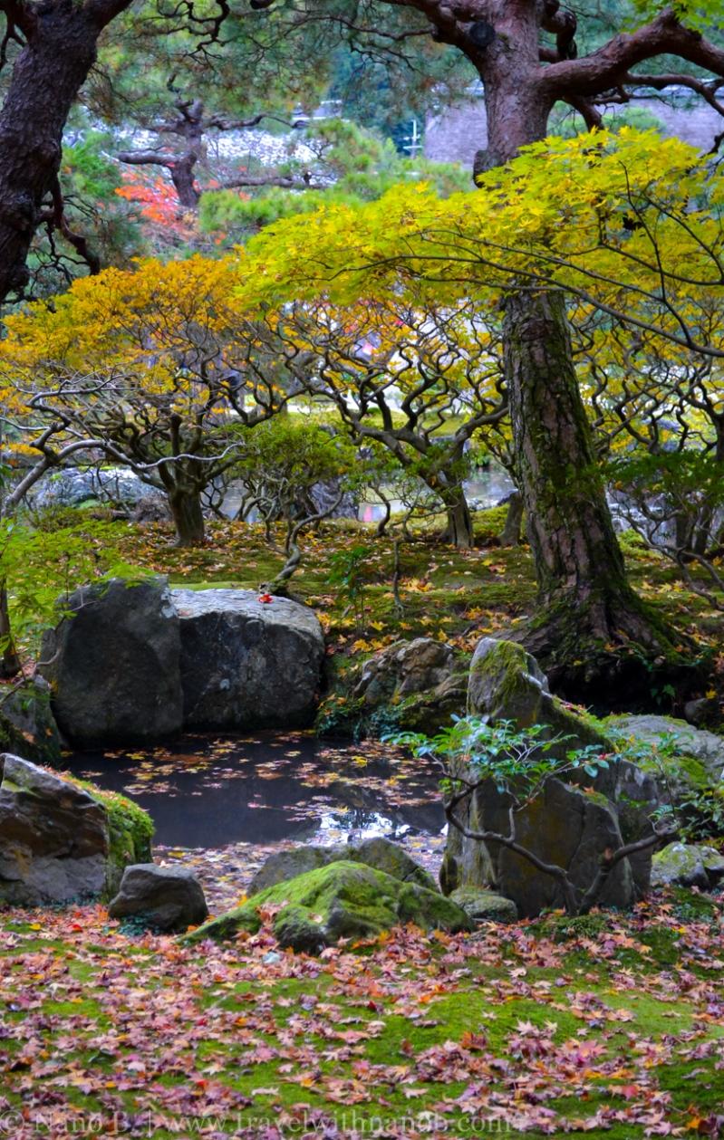 kyoto-autumn-leaves-50