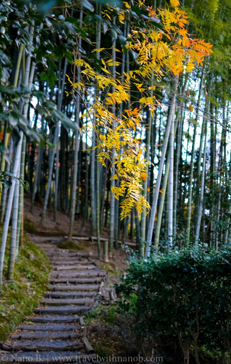 kyoto-autumn-leaves-62