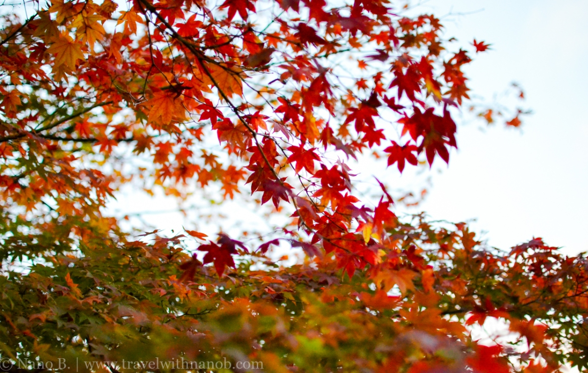Kyoto: Best Spots To View Autumn Leaves