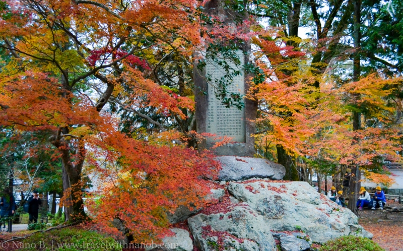 kyoto-autumn-leaves-68